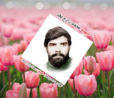 شهید محمد زارع پور احمدآبادی